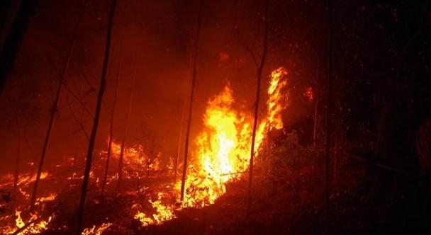 Khẩn trương làm rõ nguyên nhân vụ cháy rừng thông tại Đông Triều, Quảng Ninh