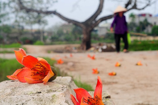 Mùa hoa gạo tháng 3 thu hút giới trẻ