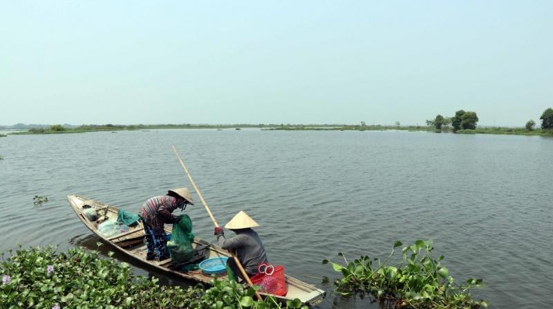 Nỗ lực khôi phục khu Tràm chim ở cửa sông Ô Lâu