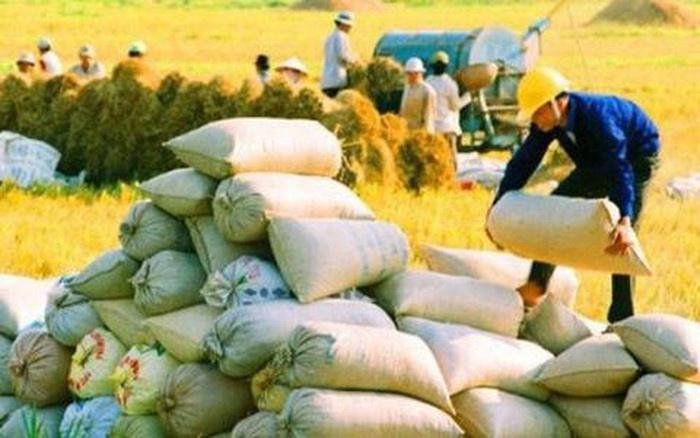 Xuất khẩu gạo phải xem xét kỹ lưỡng, thận trọng