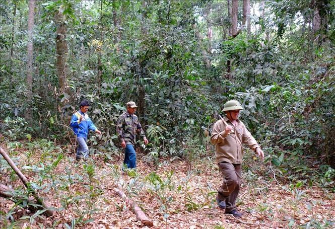 Nỗ lực giữ rừng giữa mùa khô ở Bù Đăng, Bình Phước