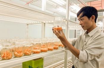 Gia Lai: Triển vọng phát triển mô hình nuôi cấy Đông trùng hạ thảo