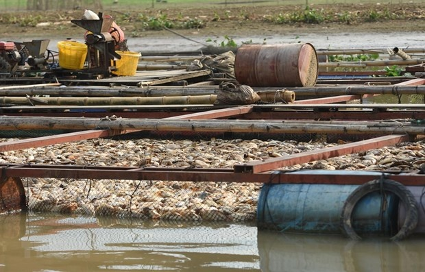 Đồng Nai: Di dời các hộ nuôi cá bè trên sông La Ngà nhằm giải quyết ô nhiễm môi trường