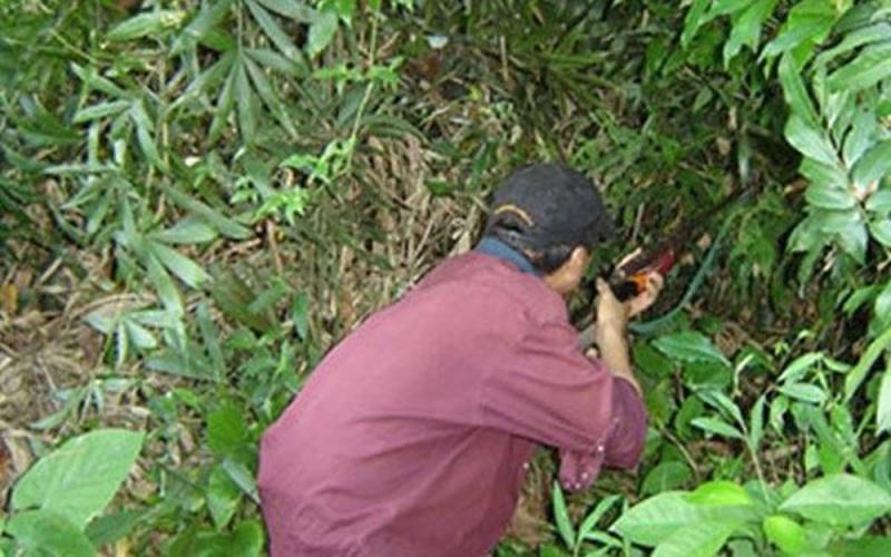 Đi săn trong rừng, bố bắn nhầm con tử vong