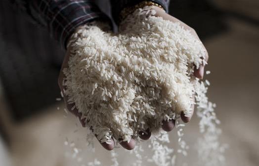 Khánh Hòa: Hỗ trợ hơn 1.300 tấn gạo cho người dân thiếu đói do hạn hán