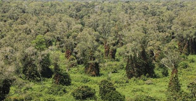 Mưa to liên tiếp giúp giảm nguy cơ cháy rừng ở Cà Mau