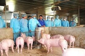 Phê duyệt Kế hoạch quốc gia phòng, chống bệnh dịch tả lợn châu Phi giai đoạn 2020-2025