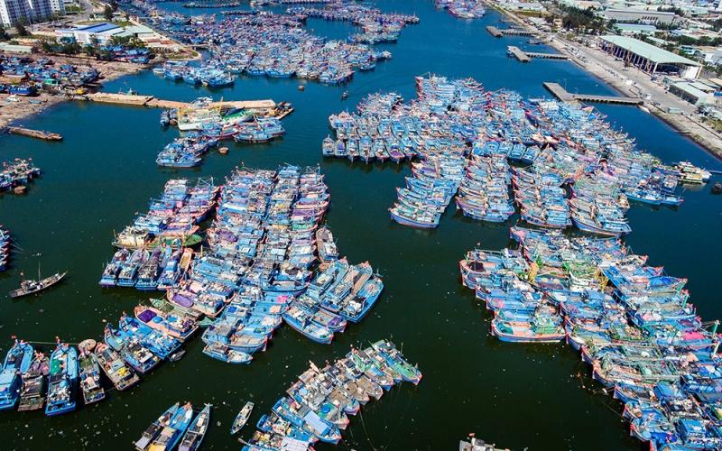 Chậm chạp triển khai nâng cấp cảng cá lớn nhất Đà Nẵng