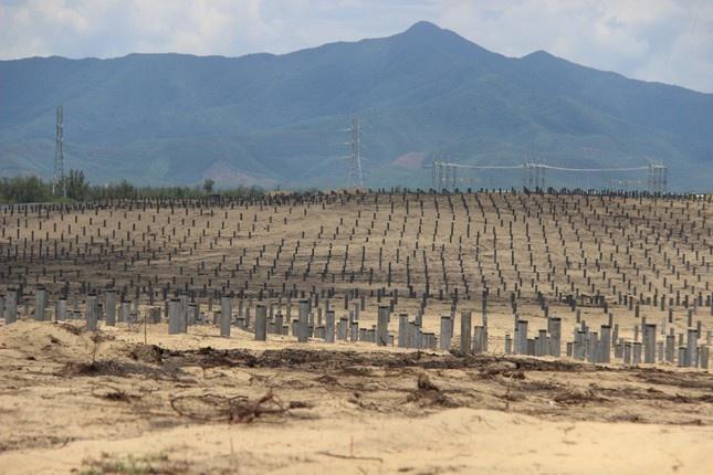 """Thành viên của tập đoàn Bamboo Capital """"phá nhầm"""" hơn 5 ha rừng phòng hộ?"""