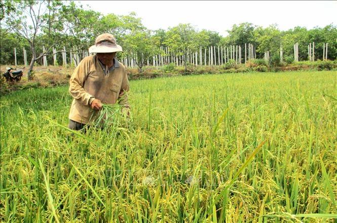 Gia Lai cần ứng dụng nhiều biện pháp phục hồi đất nông nghiệp