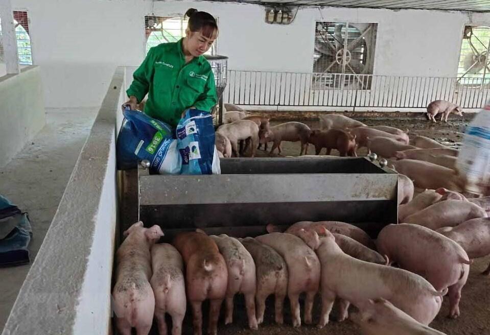 Nữ tỷ phú nuôi lợn ở tỉnh Vĩnh Phúc 