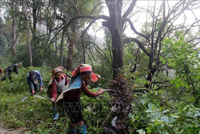 Huyện biên giới Mường Tè chủ động phòng chống cháy rừng
