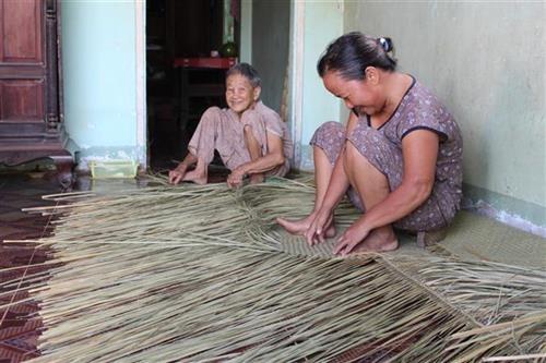 Giữ nghề đan bao đệm bàng ở Đức Huệ, Long An