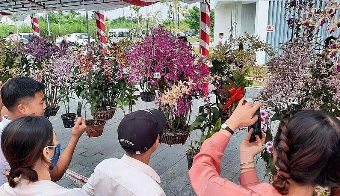 ruc ro sac mau hoi thi hoa phong lan toan quoc nam 2020