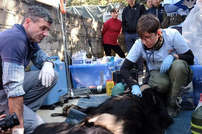Cứu hộ một cá thể gấu ngựa nuôi nhốt gần 30 năm
