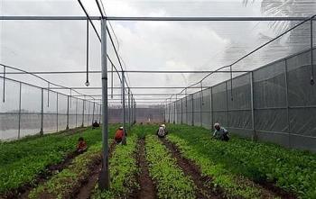 Nhiều mô hình sản xuất của nông dân Sóc Trăng thành công nhờ áp dụng công nghệ 4.0