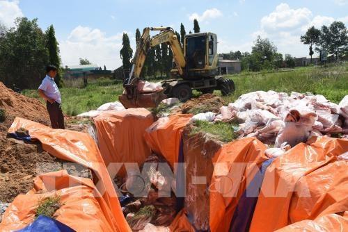 Tiêu hủy hơn 4 tấn thịt lợn nhiễm tả lợn Châu Phi tại Đồng Nai