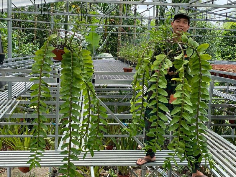 Vườn lan rừng bạc tỷ của cựu quân nhân 9x