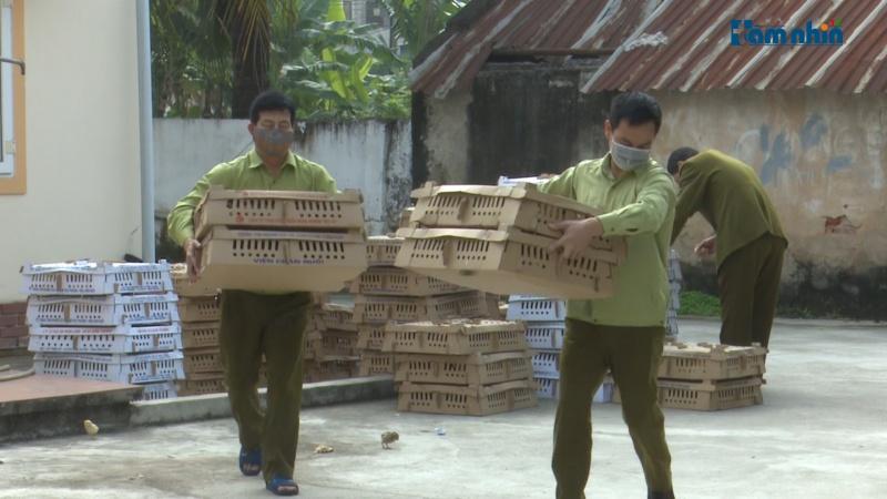7.000 con gia cầm của loạt đơn vị chăn nuôi lớn có dấu hiệu bệnh bị bắt