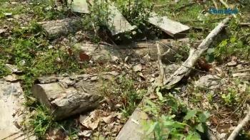 Xác minh thông tin phá rừng Chiềng Khừa