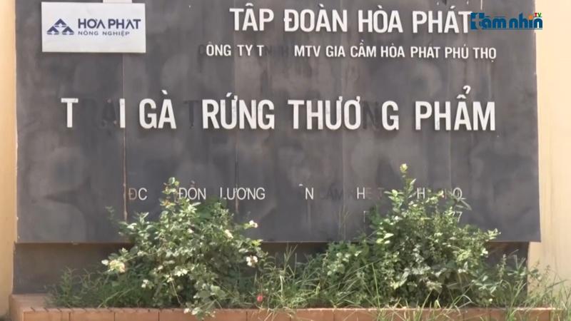 Phú Thọ: Trang trại gà của Công ty Hòa Phát bị