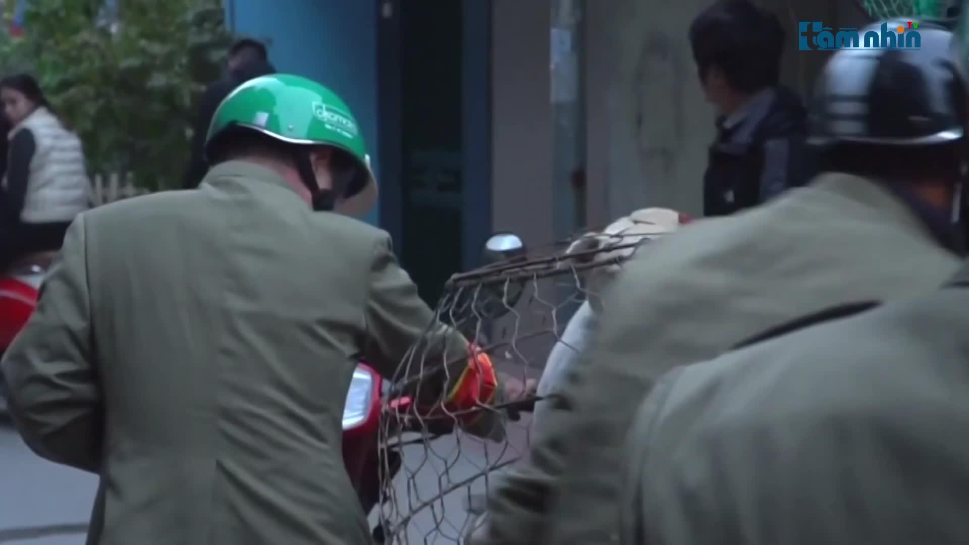 Mô hình bắt chó thả rông trở lại ở Hà Nội