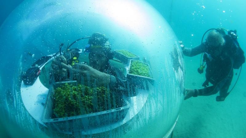 Khám phá trang trại trồng rau nằm sâu 8m dưới đáy biển