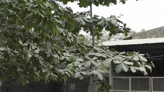 Đà Nẵng: Dân bức xúc vì môi trường bị ô nhiễm
